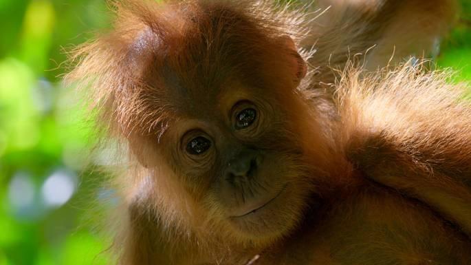 Fotograma del documental David Attenborough: una vida en nuestro planeta