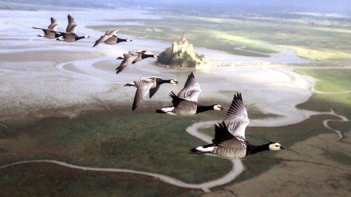 Fotograma del documental Nómadas del viento