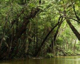 Amazônia: 7 poemas vindos do pulmão do mundo