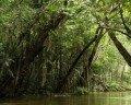 """Amazônia: 7 poemas vindos do """"pulmão do mundo"""""""