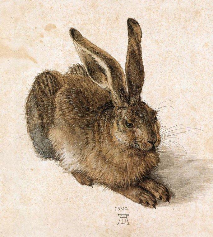 Lebre jovem, 1502 aquarela