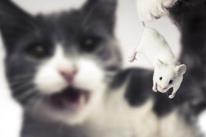 assembleia dos ratos