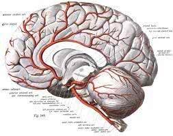 cérebro em a criação de adão