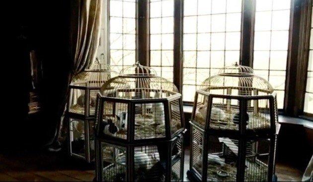 As três gaiolas misteriosas repletas de coelhos que a Rainha Ana mantinha em seu quarto.