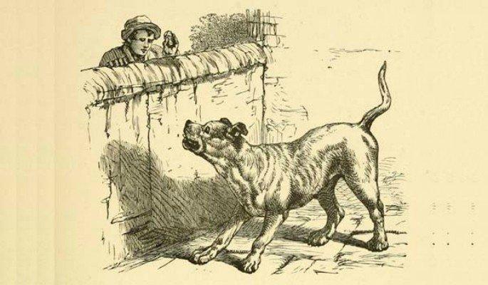ladrão e cão de guarda