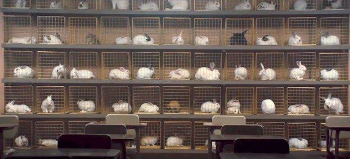 Nós: coelhos nas jaulas