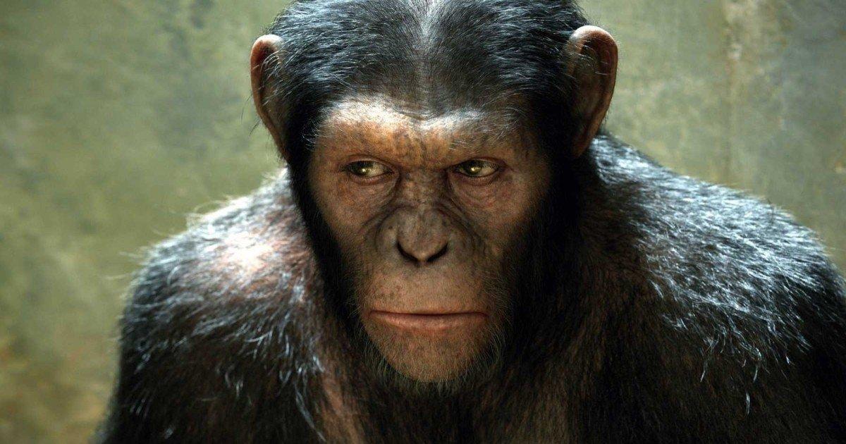 Planeta dos Macacos - Cultura Genial
