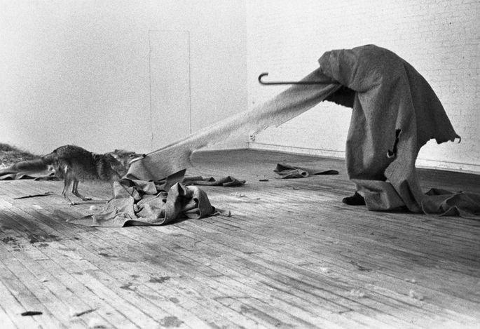 Perfomance de Joseph Beuys com coiote, cobertor e bengala