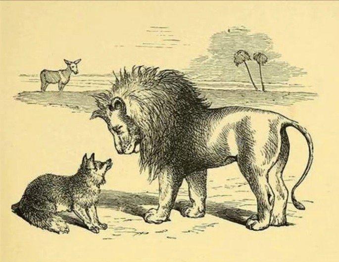 raposa e leão