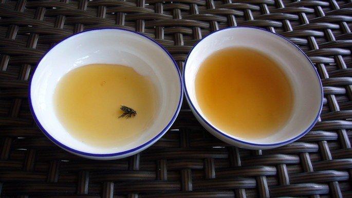 moscas e mel