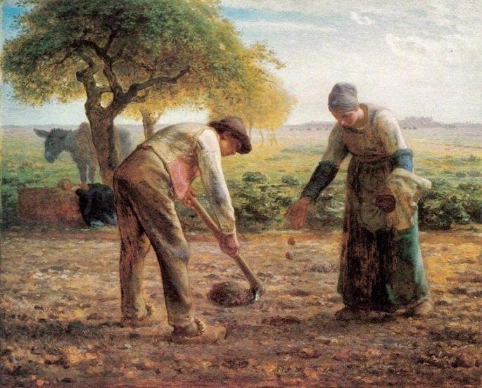 plantadores de batata